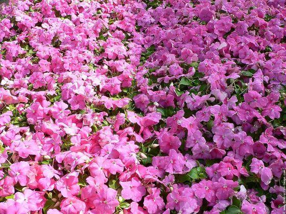fleursfond-ecran-impatience06.jpg