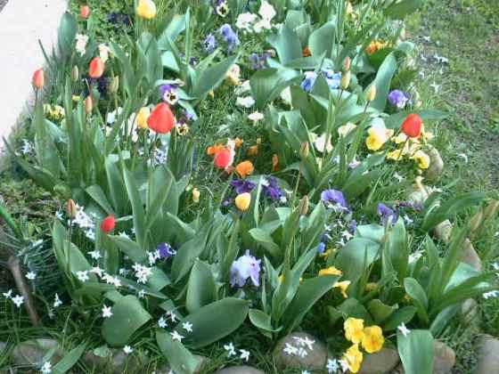 fleurs-003.jpg