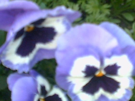 fleurs-006.jpg