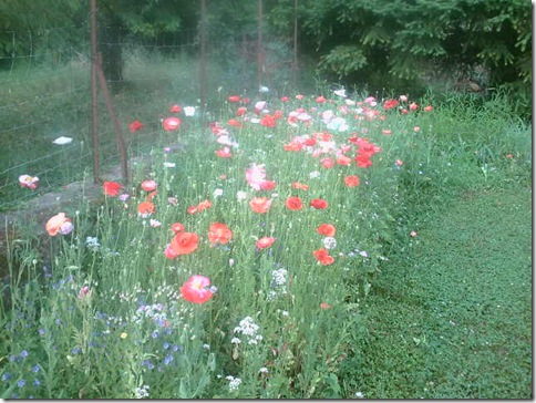 jardin2 011