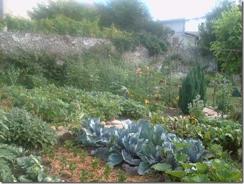 jardin2 012