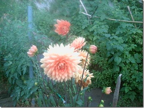 jardin2 015