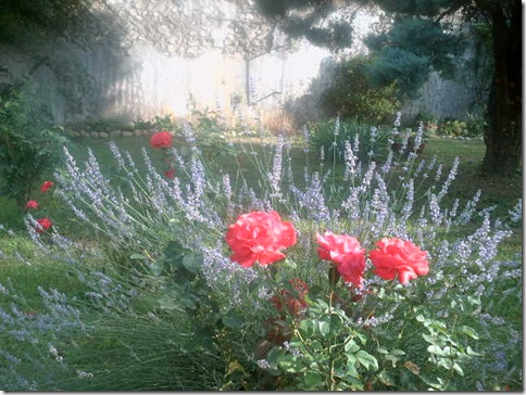 jardin2 017