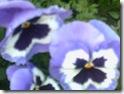 fleurs 006