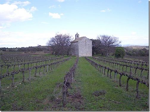 vigne en ardèche