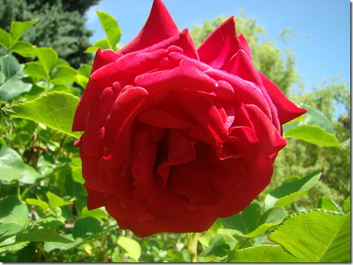 fleurs jardin 014